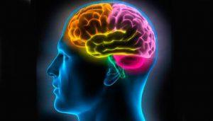FB-14-Cerveau